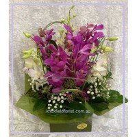 Singapore Orchid in a Box